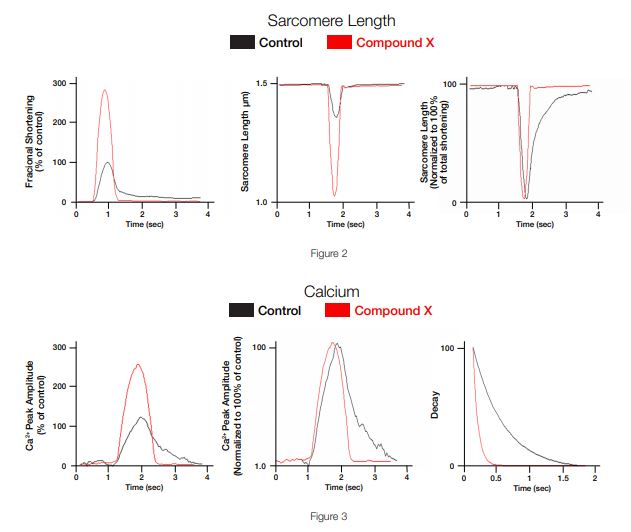 Studying heart disease by simultaneous measurement of changes of Sarcomere Length