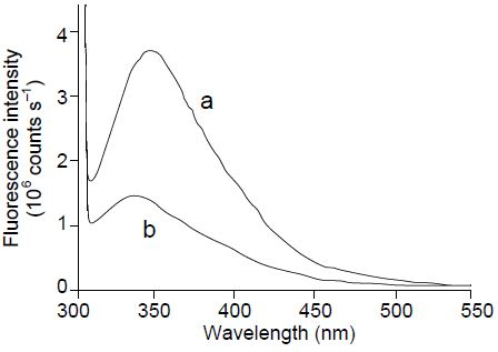 Assessing UV Damage of Hair with Fluorescence