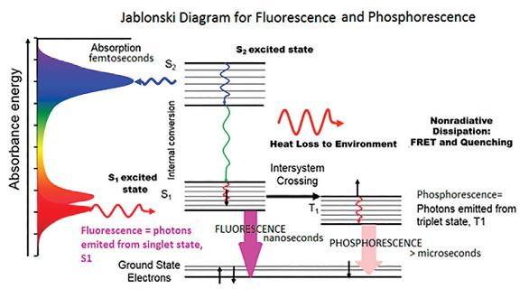 Horiba principles and theory of fluorescence spectroscopy a schematic of the transition of electronic state of a molecule during the fluorescence phenomenon ccuart Choice Image