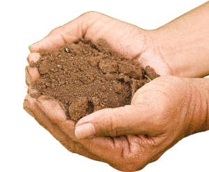 Soil pH and Nutrient Availability-01