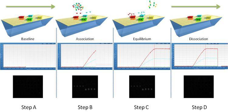 Monitoring of molecular interactions by SPRi