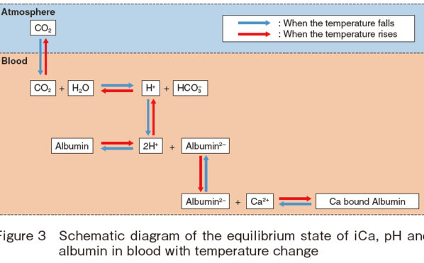 Schematic diagram of the equilibrium state of iCa, pH and albumin in blood with temperature change